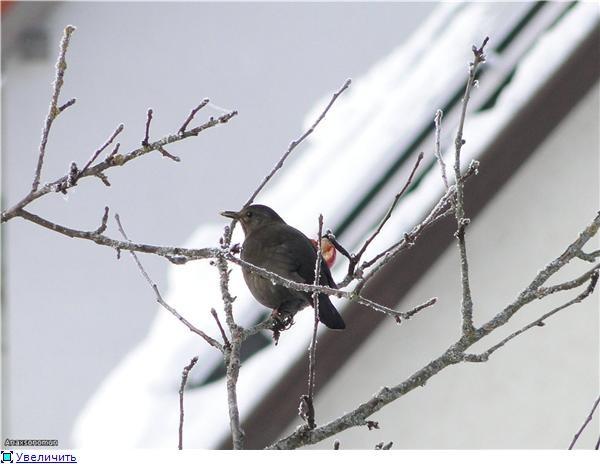 птички первая фотка - 2