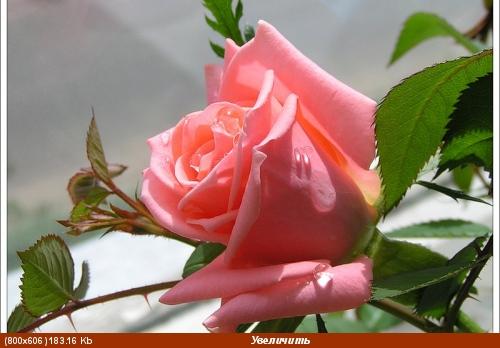 Если женщина прекрасна, В ней особенная стать, Если чувственна и страстна, И умеет зажигать, Но при...