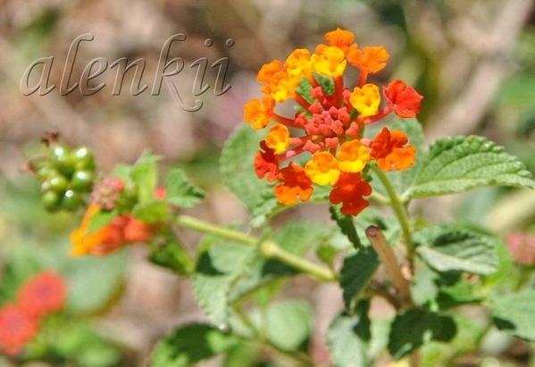 Стараясь не пропустить изумительные цветы монастыря,мы поочередно снимаем цветок за цветком, переша...