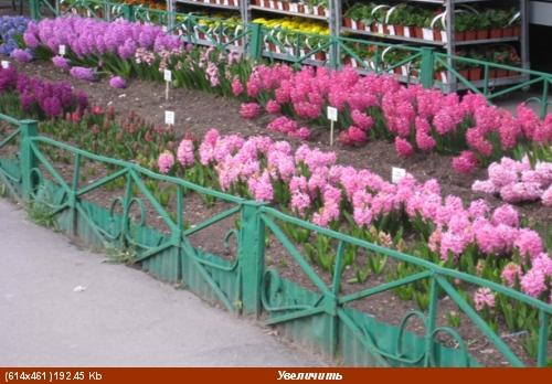 Покажу ещё несколько фоток с цветами из того-же скверика мне фотка понравилась с геоцинтами Танюш,...