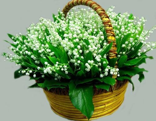 Люся, поздравляю твоего папу с днем рождения и всех вас с праздником ну и жду кучу рецептов ( куроч...