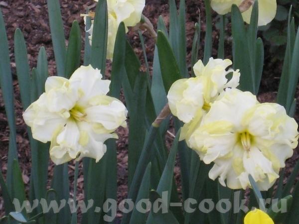 Покажу ещё несколько фоток с цветами из того-же скверика мне фотка понравилась с геоцинтами Танюш,... - 3