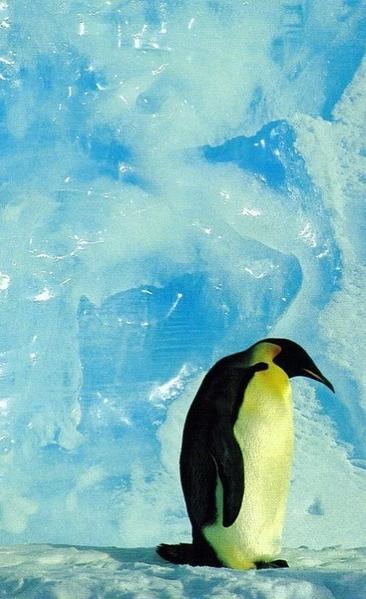 Ну а если нарисовать льда и воду- как Linda Besse Melissa Barrett А может быть что-то из этого по... - 5