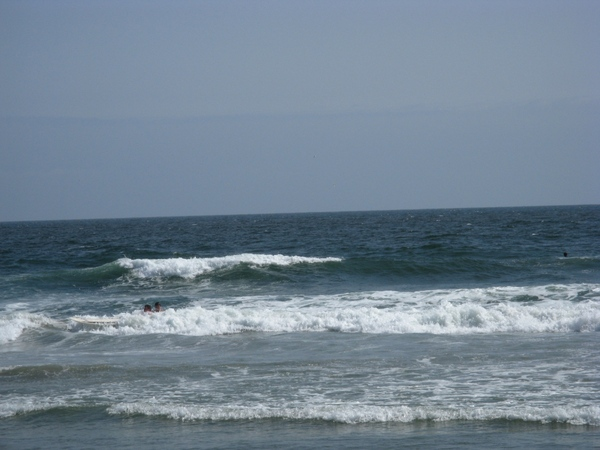 И еше немного пляжа c океаном, флорой и фауной и ee обитателями птицы похожие на пеликанов ловят ры... - 3