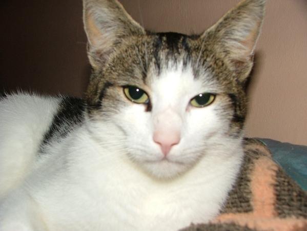 Памяти моего любимого котика ГУФФИ, посвящается