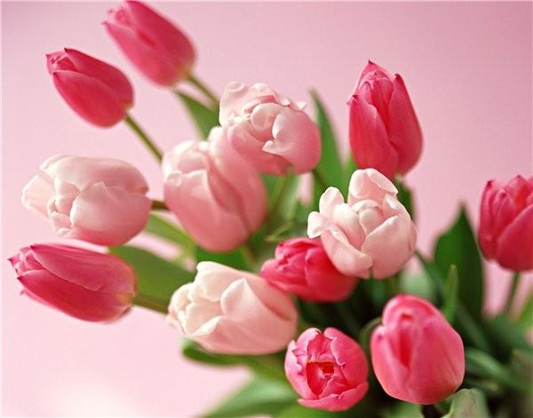!!!Поздравляю всех с праздником весны!!! . Дорогие софорумчане и софорумчаночки!!! Убедительная про... - 3