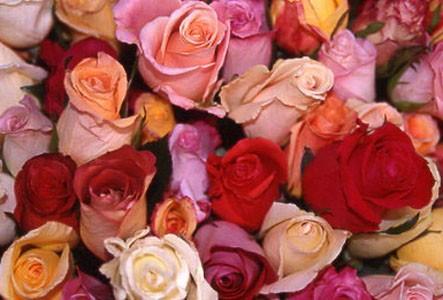 Сногсшибательная цветов