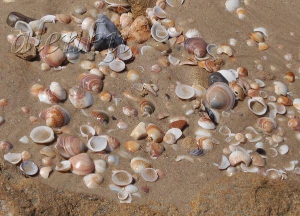 Медленно бредем по мягкому морскому песку - 3