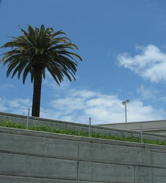 Девочки я начала мой рассказ о поездке в Калифорнию у меня в теме, его начало можно посмотреть тут...