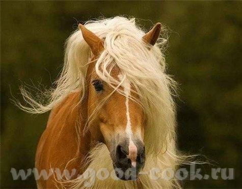 Для любителей лошадей и кошек - 2