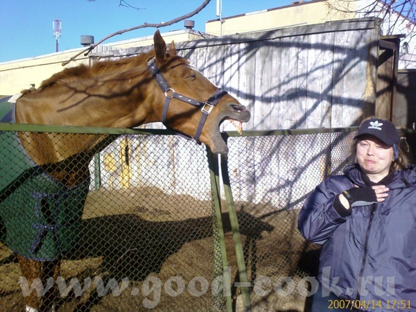 Подошли покормить, лошадка была такой дружелюбной, съела яблоко с хлебушком и вдруг как оскалиться,...