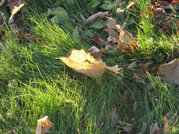 Танюша красивые фото, мох и листики дубовые - 5