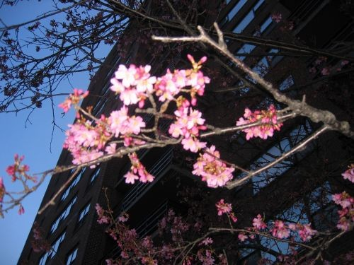 К нам весна похоже пришла