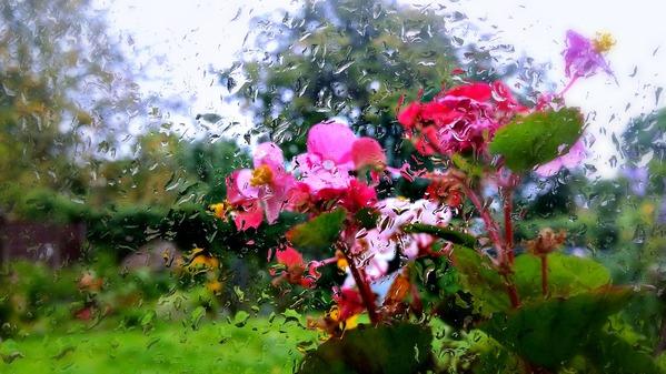 А за окном опять идет дождь