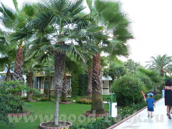 Отзыв Палома Бич Мы отдыхали в Сиде, отель Paloma Beach (бывш - 2