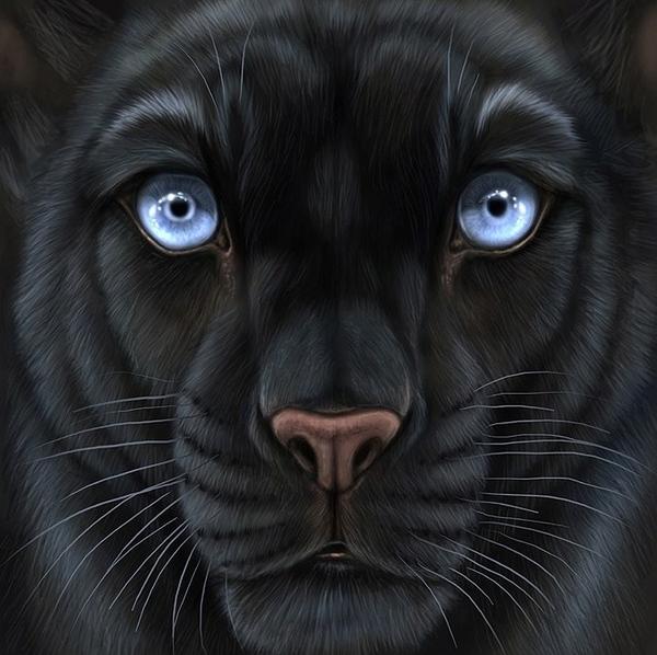 Рисунки животных карандашом работы художницы Anastasia Korochansckaja - 2