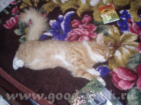 Ира зовут меня Света У нас тоже первый кот пришёл к нам сам