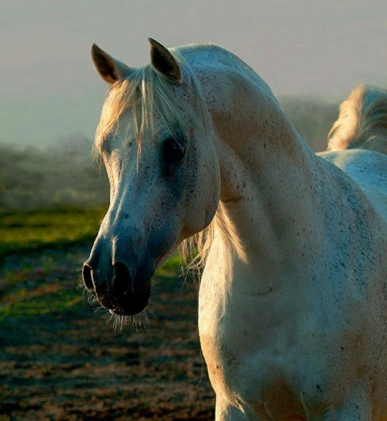 кому лошадок - 3