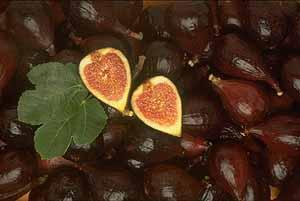 Жимолость (honeysuckle) Барбарис (barberry) Инжир (винная ягода) (fig) - 3
