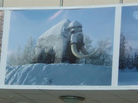 Вот так мамонт зимой выглядит - 2