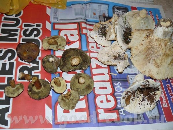 Мы тут сегодня по лесу гуляли и грибы нашли, муж говорит, что сьедобные, белые грузди, сын младший...