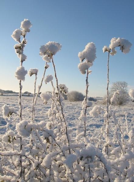 Спасибо за спасибо Зима у нас, в Ирландии Обычно у нас снега не бывает, или только один день после... - 4