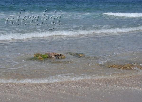 Своё тепло дарит ласковое солнце голубым волнам и золотому песку - 4