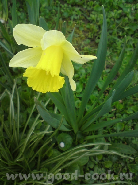Немножко тюльпанов: И - пионы - наготове