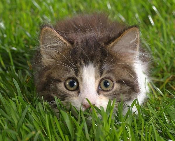 Кому кошки нужны Кошкин форум - 6