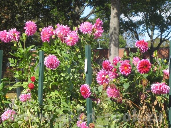а потом мы набрели на что то типа маленького ботанического сада с красивыми цветами - 3