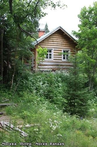 Коневский Скит А дорога продолжается Одинокая берёзка среди соснового леса - 3