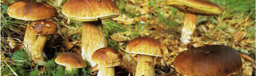 Колпак кольчатый маринованный от Mus Маслята маринованные от naina Консервирование грибов от nushap...