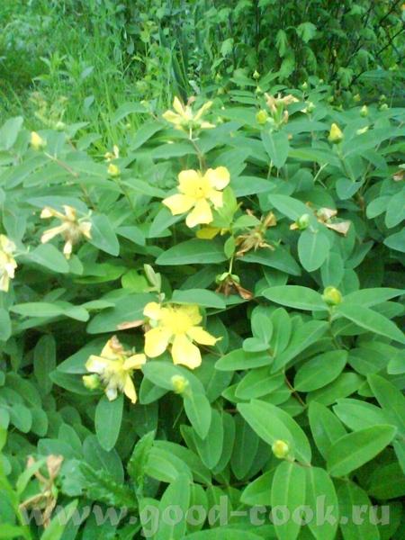 А вот наши садовые цветы : просто летний букет,поднимающий настроение, красавица астильба садовый з... - 3