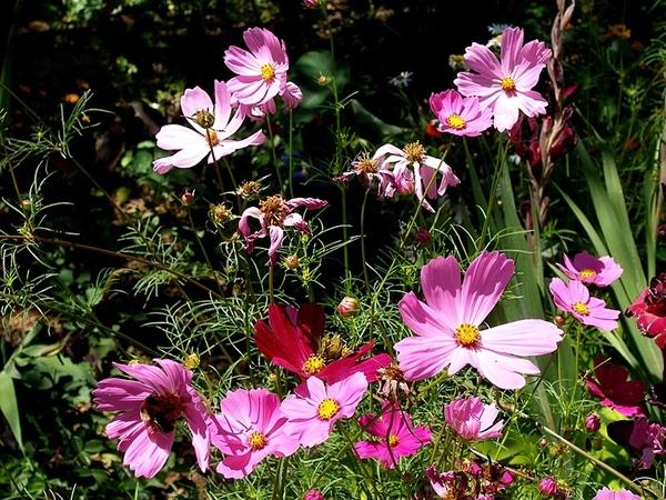 Поздравлю тебя своими цветочками