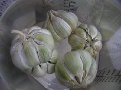 Турш сярмисаг - маринованный чеснок Я очень люблю чеснок