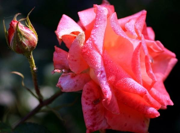 Ето вам красота и всем Ага- красиво, спасибо Ну ничего, можно чуть пожже сделать то что xотите А сс... - 9