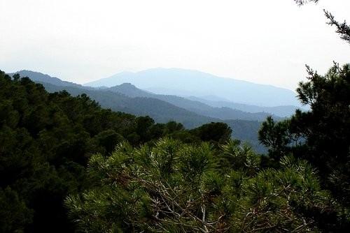 А ето гора Альберка - 2