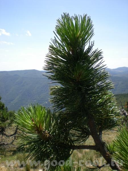 А вот вам немного наших пейзажей, это в воскресенье мы ездили на пикник на Монт Эгуаль (Mont Aigoua... - 2