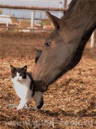 Для любителей лошадей и кошек - 4
