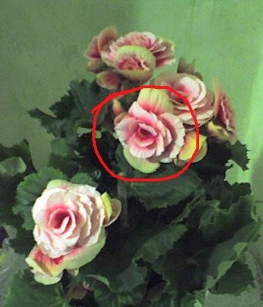 1.будем делать чтобы цветок приближался крупным планом, а потом отдалялся 2.желательно чтобы рисуно... - 3