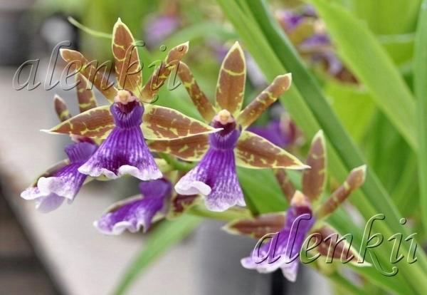Здесь можно купить и орхидеи - 4