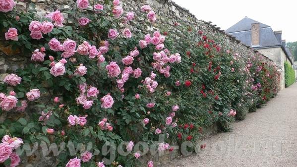 И виды со стороны сада: Это из музыкального сада: Овощной сад на самом деле был из зеленого и красн... - 6