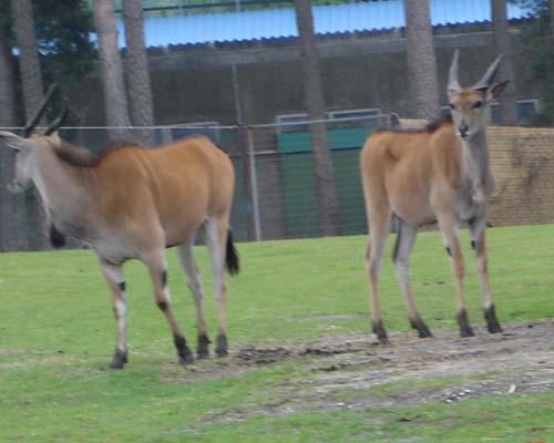 Ну вот, фотки из Сафари парка - 3