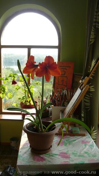 А вот мои маки , этого года а это водосбор еще немного цветочков Вот такая красота расцвела у меня на балконе И на п... - 4