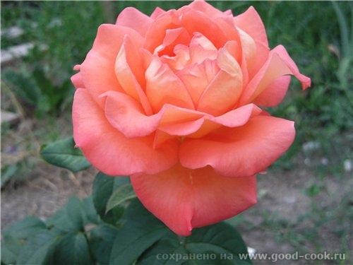 Светик, цветы потрясающие - 4