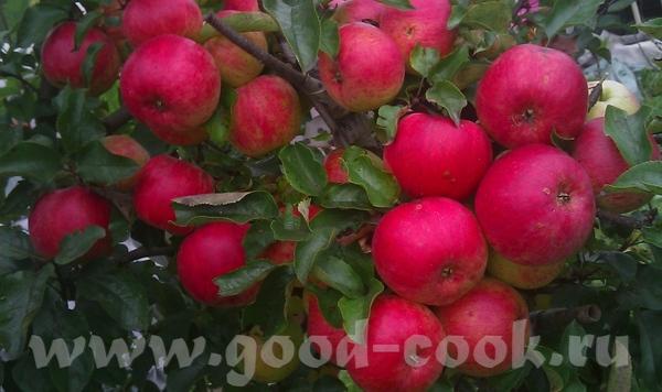 пусть год принесет много творческих плодов, как эта яблоневая веточка