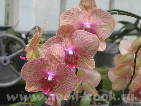 вот это орхидеи - 3