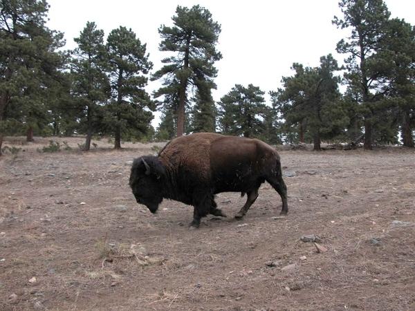 Продолжаю свои попытки познакомить вас со штатом Колорадо - 3