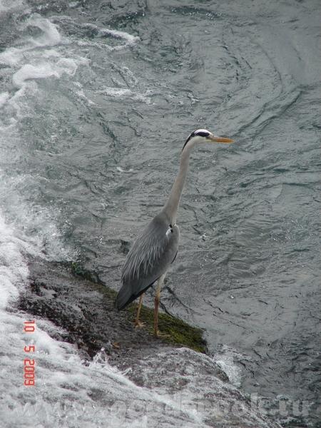 а посреди маленького водопадика с боку от оснеовного вот такая птичка стоит(не настоящая , а выгляд... - 3
