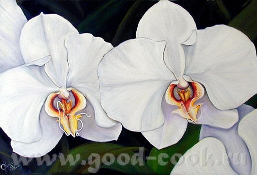 Вот нашла орхидею